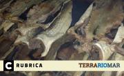 terra-rio-mar